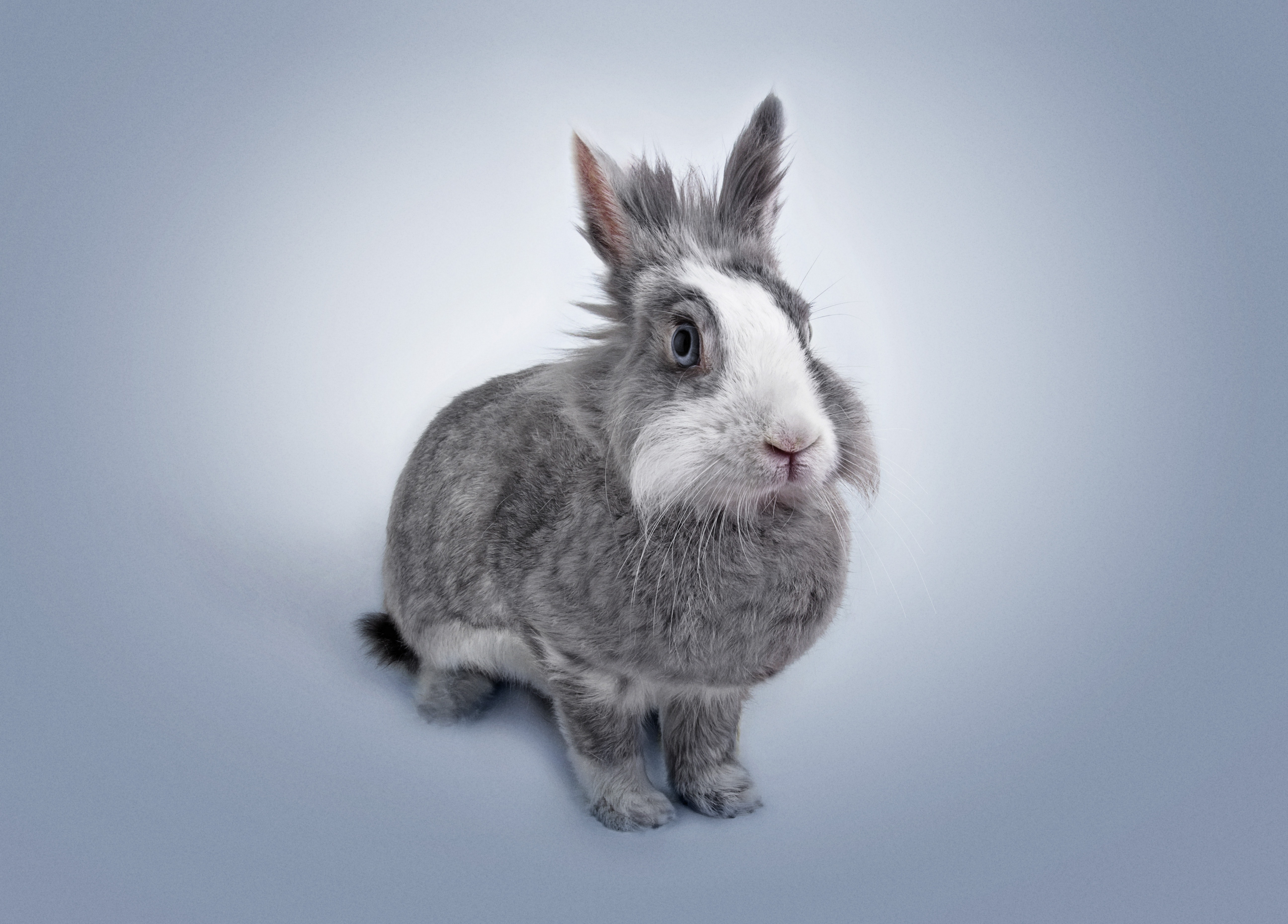 different rabbit breeds rabbit species