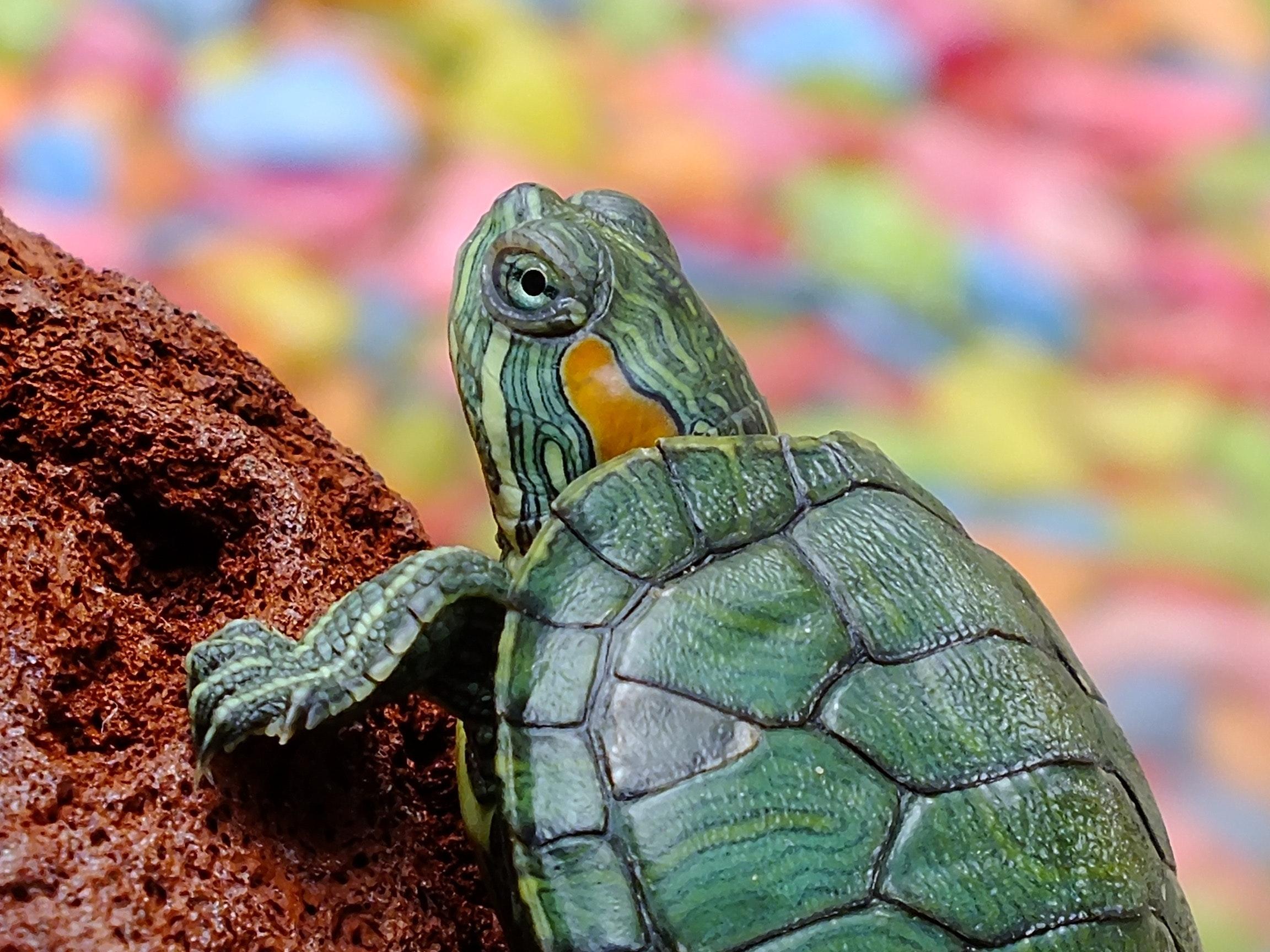 best turtle tank heater
