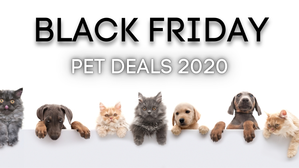 black friday pet deals