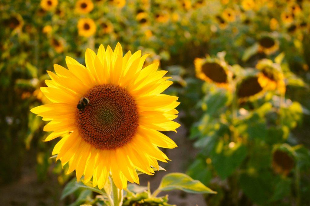 fun bumble bee facts