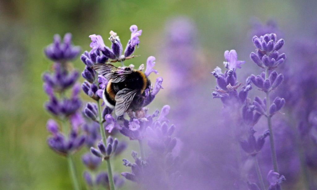bumble bee ground bee
