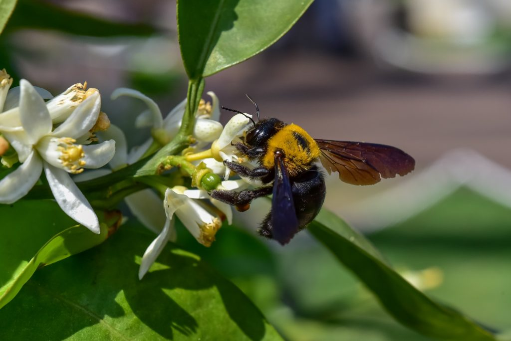how to fix damage caused by carpenter bees