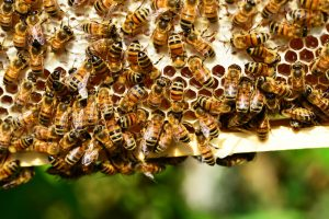 beekeeping for dummies by howard blackiston