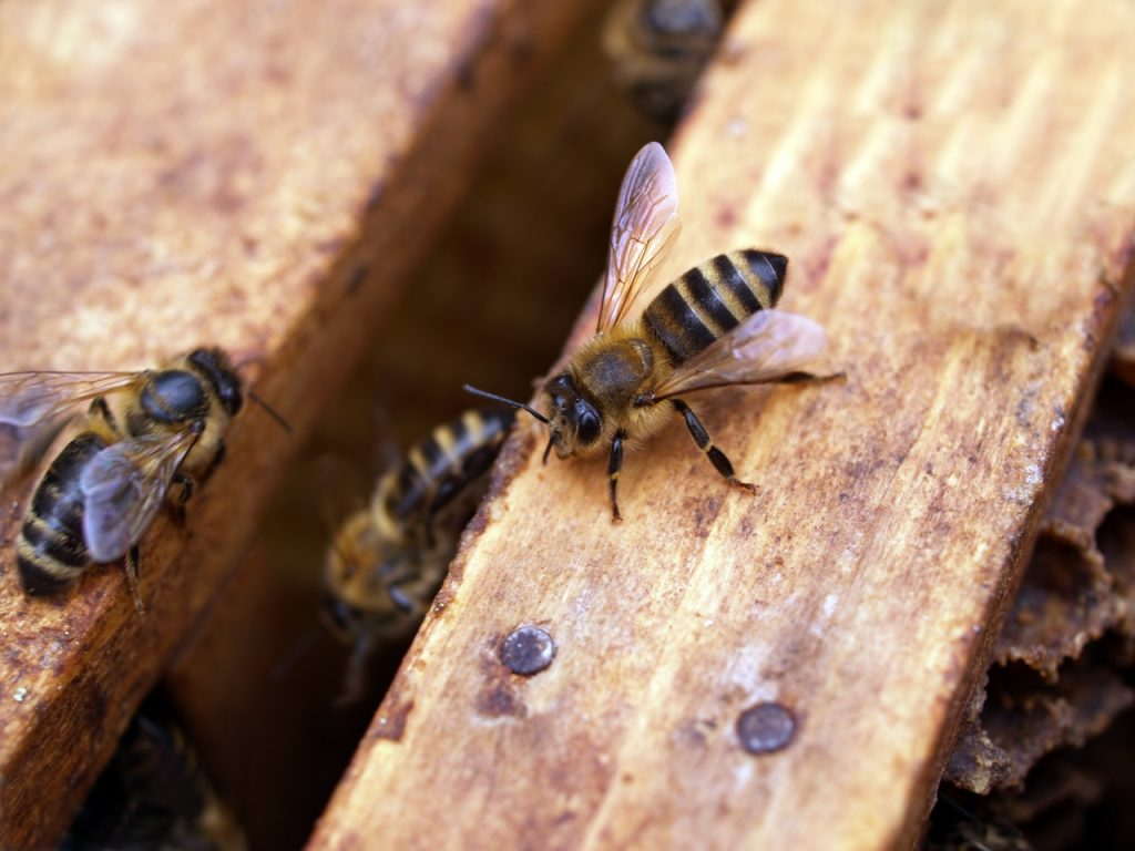 how long does a bee live