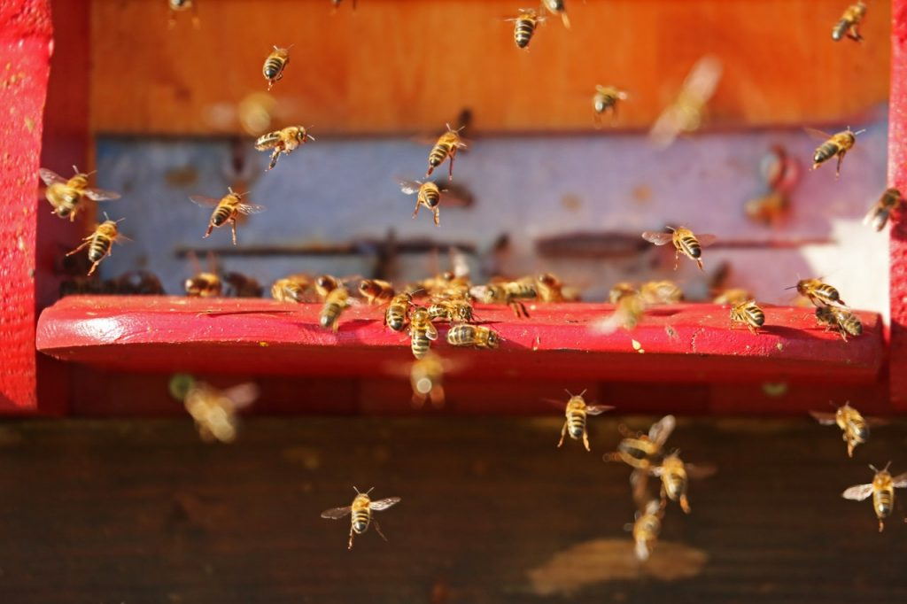 how long do worker bees live for