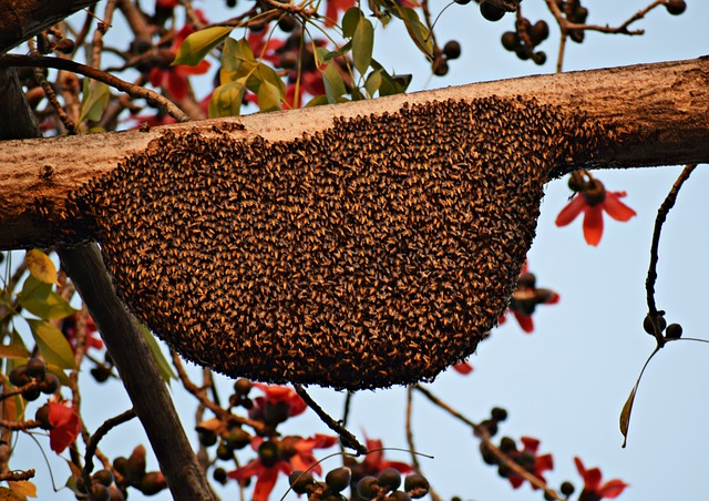 why do bees swarm in the fall