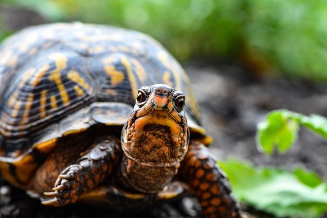best turtle toys for pet turtles