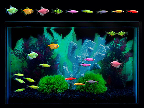 best tank for glofish