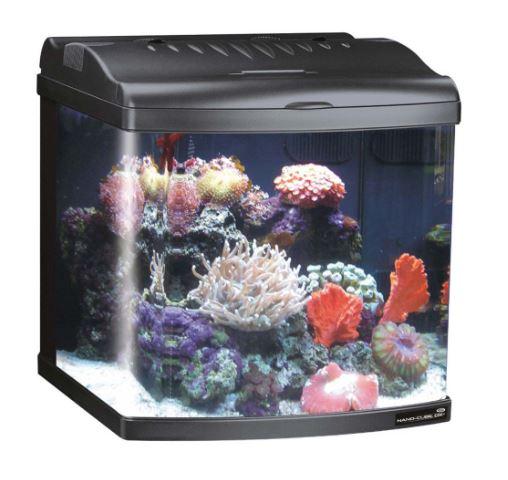 mini fish tanks