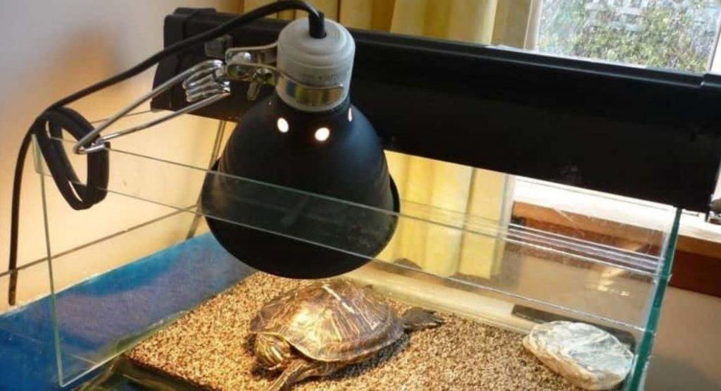 uvb light for turtles