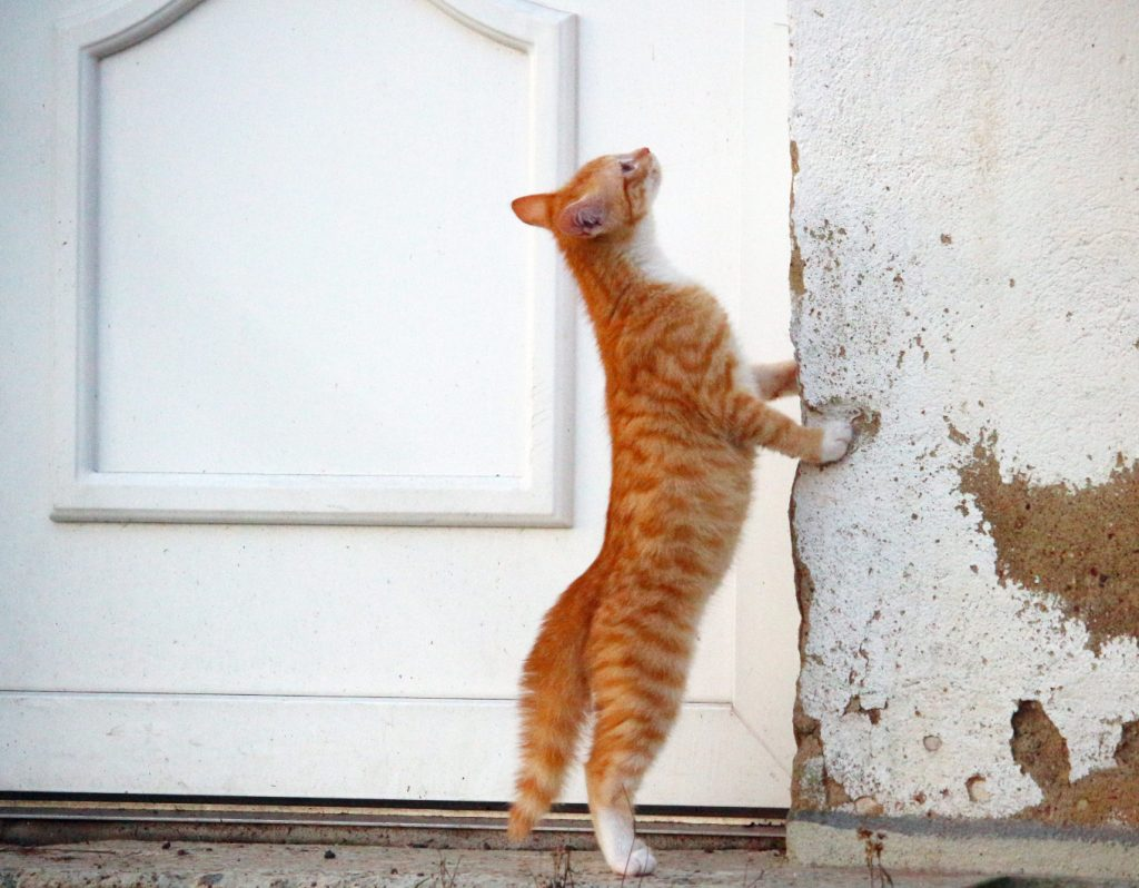 cat pounds on the door every night