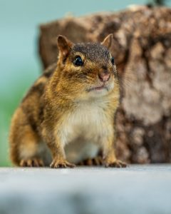 can squirrels get into your house