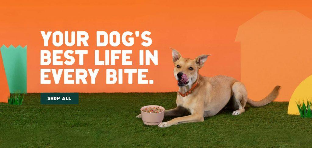 best online pet food delivery