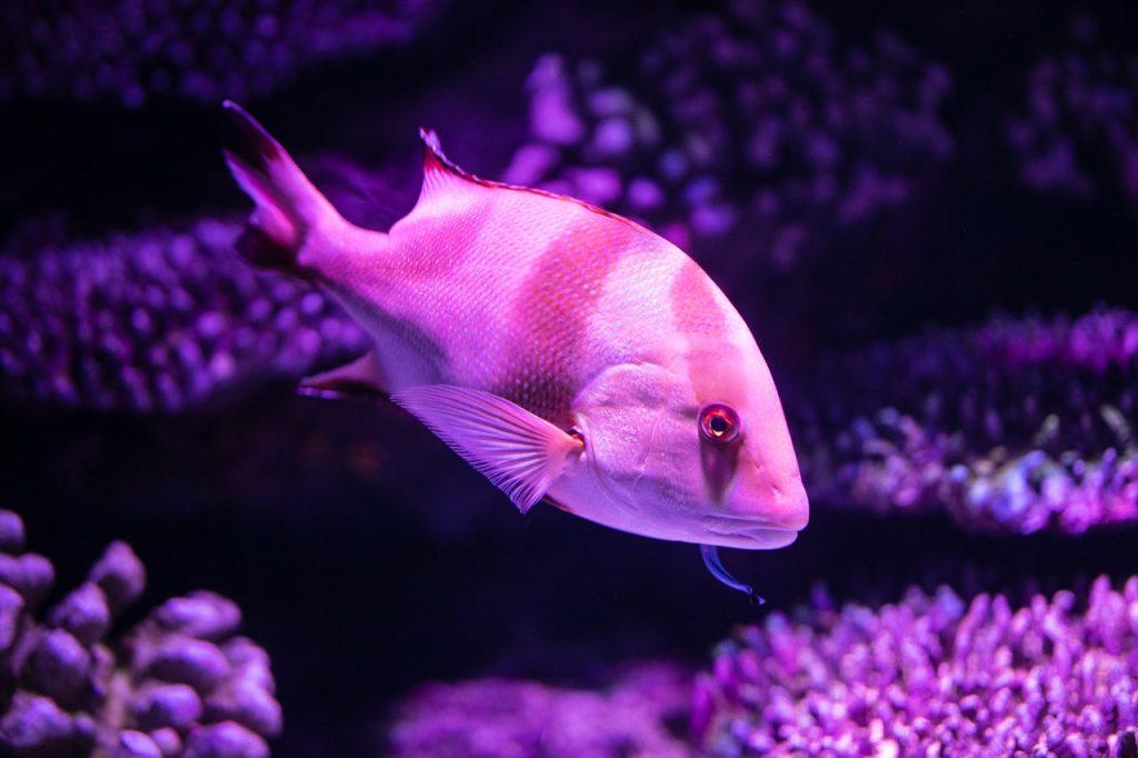 best fish tank dosing pump