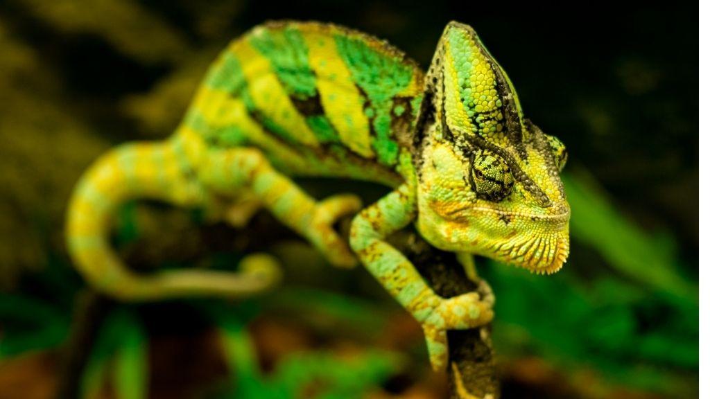 best reptile fogger