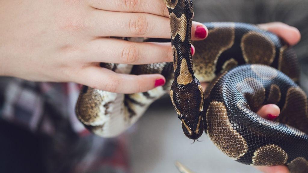 reptile mister