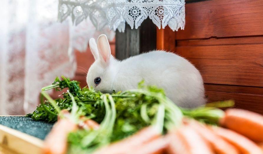 rabbit hutch indoors