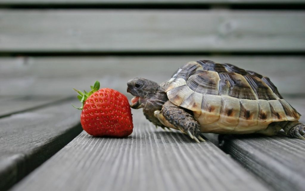 do turtles get lonely