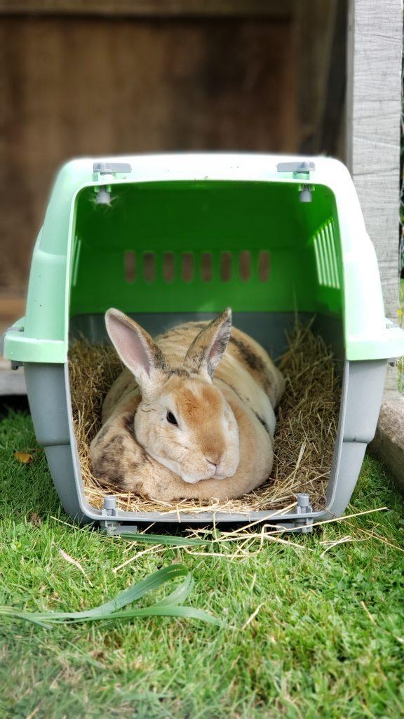 rabbit to change its circadian rhythms