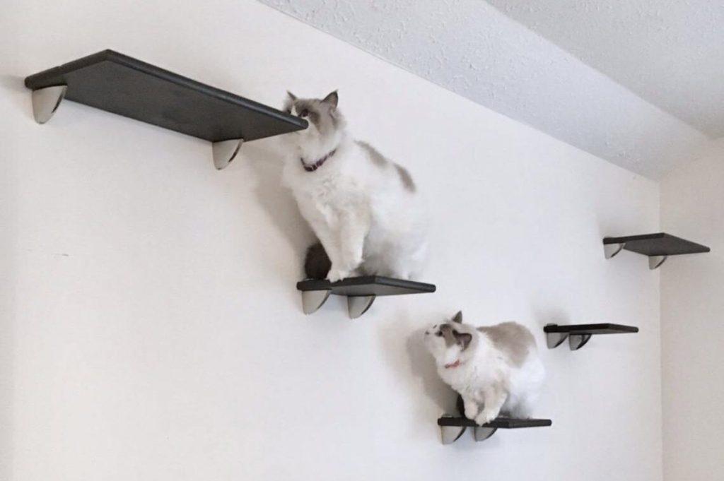 best cat climbing wall
