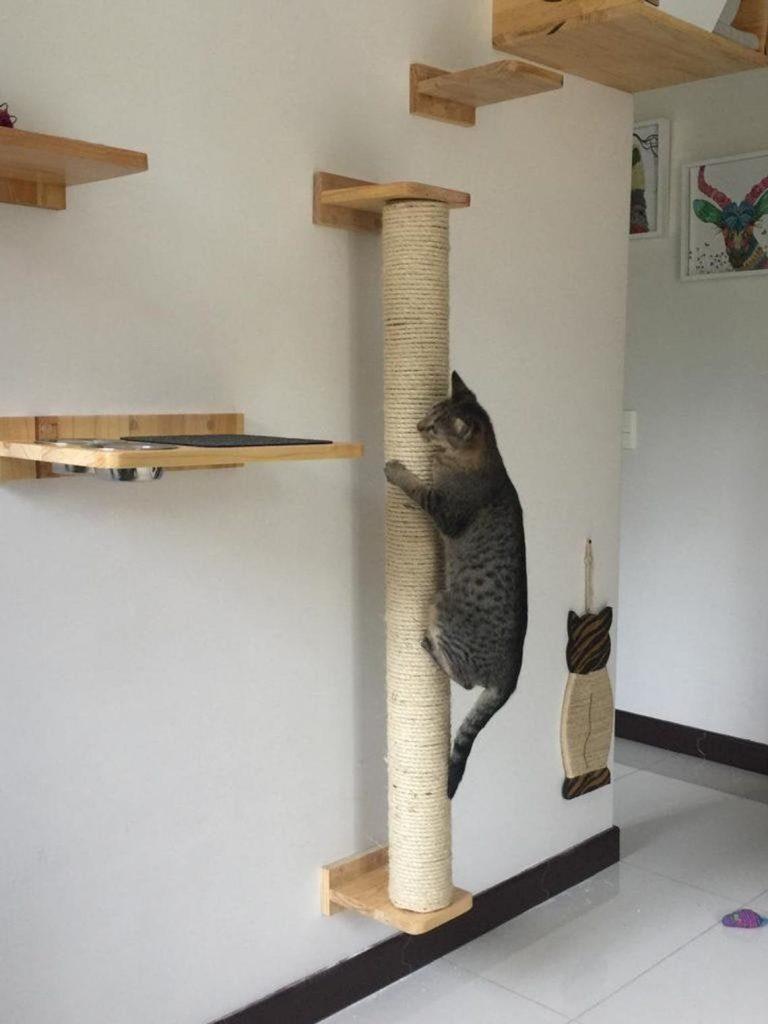 best cat wall poles