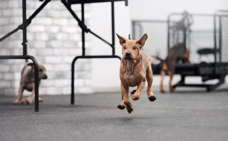 cbd oil for hyper dogs