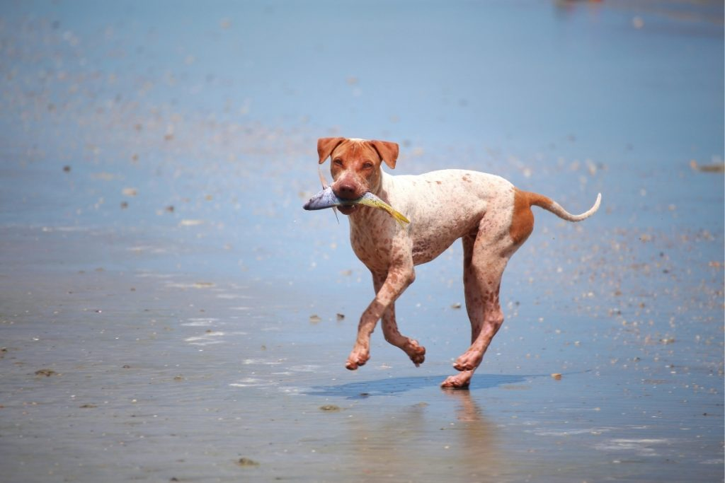 health benefits of fish for dogs