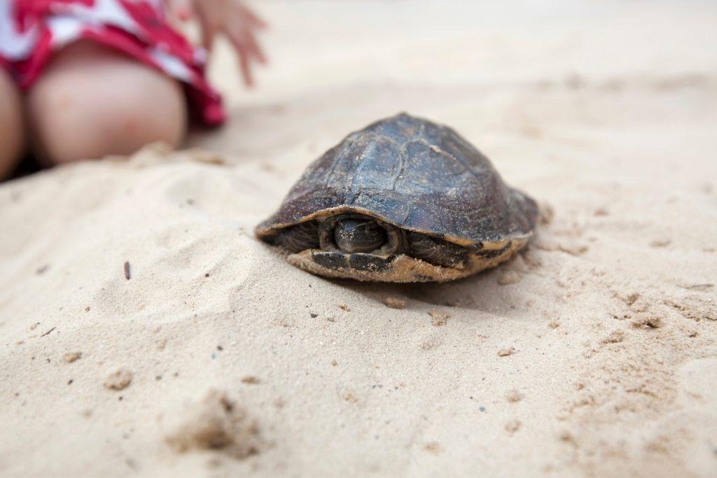 do turtles sleep?