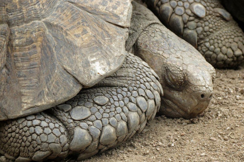 do turtles sleep underwater
