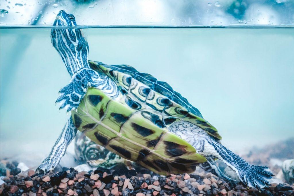 do turtles make noise
