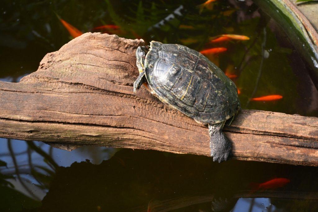 when do turtles sleep