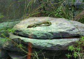 5 Best Reptile Hygrometer Picks | Reptile Humidity And Temp Gauge