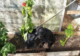 Can Dogs Eat Bell Peppers? Our Dog Does – Take A Look!