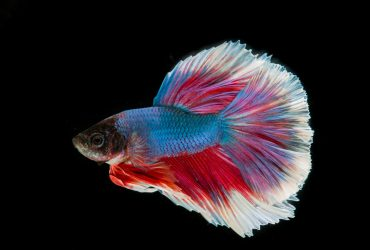 The Best 3 Gallon Fish Tanks – Small Fish Tanks For Easy Care