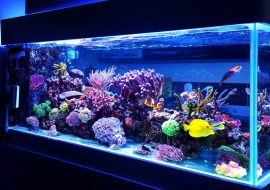 Best Aquarium Dry Rock – Top Buys & Everything You Need To Know