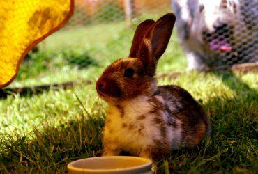 Advantek Rabbit Hutch Review – Advantek The Stilt House Rabbit Hutch