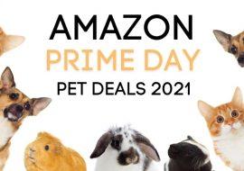 Amazon Prime Day 2021 Pet Deals: Dogs, Cats, Reptiles, Aquatics, & More!