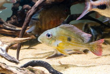 Aquarium Driftwood Buyers Guide: Pros, Cons, & Top Picks