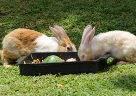 5 BEST Automatic Rabbit Feeders And Why You Need One
