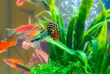 The BEST 10 Gallon Fish Tank | Aquariums, Kits, And Hoods