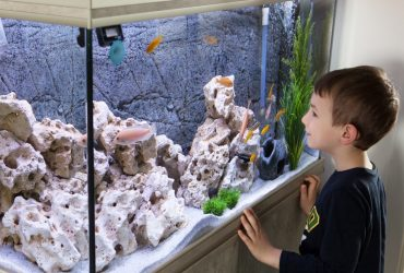 The 5 Best 75 Gallon Aquariums For Serious Fish Keepers!