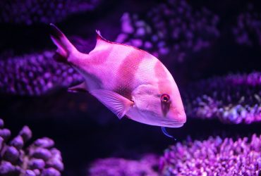 What Is The Best Dosing Pump For Aquariums?