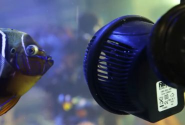 Aquarium Powerhead Buyers Guide: Get The Right Pump First Time!