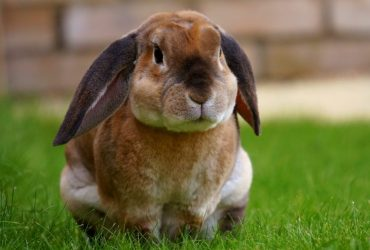 The Best Rabbit Treats And Snacks For Your Bunny!