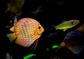 What Fish Go Well In A Community Tank? Here Are The Best Fish AND Tanks!