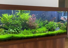 The 10 Best Aquarium Chillers of 2021: Reviews and Buyer's Guide