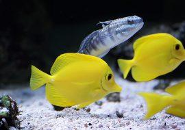 The Best Fish Tank Vacuum: 5 Top Aquarium Vacuum Picks