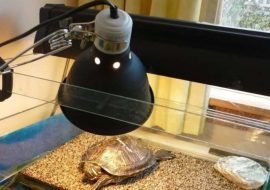 The 5 Best Heating Lamps For Turtles – UVB Light Bulbs