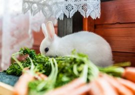 The 5 Best Indoor Rabbit Hutches, Cages, And Pens