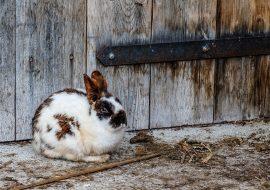The 5 Best Outdoor Rabbit Runs | Large Rabbit Enclosures